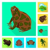 Isolated Object Of Wildlife And Bog Logo. Collection Of Wildlife And Reptile Stock Vector Illustrati poster