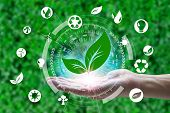 Hand Holding With Leaf And Environment Icons Over The Network Connection On Nature Background, Techn poster