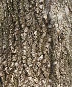 background of tree bark