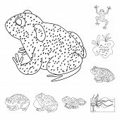 Isolated Object Of Amphibian And Animal Symbol. Set Of Amphibian And Nature Stock Vector Illustratio poster