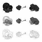 Isolated Object Of Wildlife And Bog Symbol. Set Of Wildlife And Reptile Stock Symbol For Web. poster