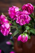 Faded Purple Roses Flowers On  Wooden Background, Close Up, Selective Focus poster