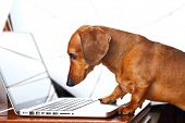 perro utilizando la computadora