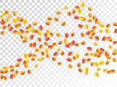 Maple Leaves Vector, Autumn Foliage On Transparent Background. Canadian Symbol Maple Red Orange Yell poster
