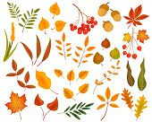 Big Set Of Cute Leaves From Different Kind Of Trees Isolated. Set Of Colorful Autumn Leaves And Berr poster