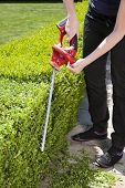 foto of electric trimmer  - The person cuts the hedge by the Hedge trimmer - JPG