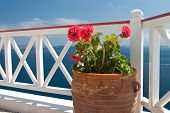 Flowers In Vase On Summer Balcony