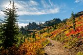 Vibrant Autumn Colors In Washington Wilderness On Sunny Day poster