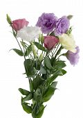 eustoma  flowers in posy