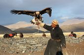 foto of eagle  - MONGOLIA  - JPG
