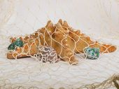 picture of inference  - Seashells and starfish caught in a fishing net for use as an aquatic inference or decorative background - JPG