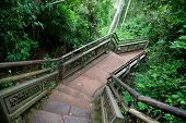 Path in Iguazu