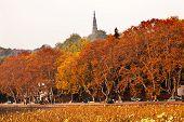 Ancient Baochu Pagoda Autumn West Lake Hangzhou Zhejiang China