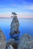 Portofino Park. Kiefer Baum Felswand. Langzeitbelichtung. Ligurien, Italien
