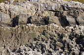 Coastal Rocks Eroded By The Sea