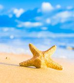 stock photo of starlet  - Under the Sun Sea Starlet - JPG