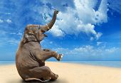 image of elephant ear  - Elephant having fun on the beach - JPG