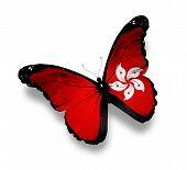 Hongkong Flag Butterfly, Isolated On White