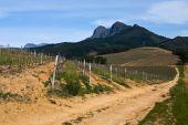Wine Farm In Stellenbosch