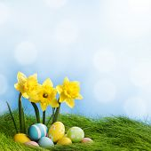 Easter eggs at the foot of a daffodil plant and fresh green grass