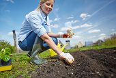 image of natural blonde  - Image of female farmer sowing seed in the garden - JPG