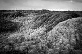 Wind-blown grasses