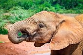 Elephant at the small watering hole in Kenya. Afrika.