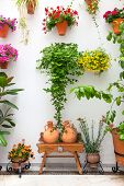 Cordoba Patio Fest - Private Courtyard with Flowers decorated , Spain, Europe