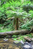 An image of the beautiful tropical forest in Australia
