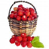 Wild Strawberries in wicker basket close up  isolated over white background