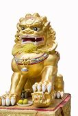 Chinese Lion,glod