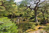 KYOTO, JAPAN - APRIL 26th  : Pond and pine trees in the Japanese garden of Ginkakuji Temple, Kyoto, Japan on 26th April 2014.