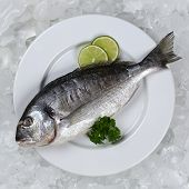 Fresh Fish On A Plate From Above
