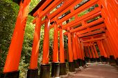 Thousands of Torii with green trees background, Fushimi Inari Taisha Shrine, Kyoto, Japan.