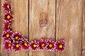 beautiful chrysanthemum flowers on brown wooden background