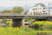 KYOTO, JAPAN - APRIL 20th : Scenery of Kamogawa with yellow flowers and bridge in Kyoto, Japan on 20