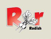 Fruits and vegetables alphabet - letter R - vector eps 10 illustration