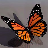 Monarch Butterfly Edited