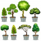 Illustration of different potted plants