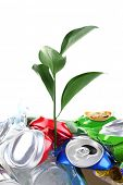 Green plant growing among cans isolated on white