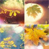 autumn orange collage