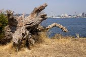 picture of driftwood  - A piece of driftwood frames the city of the Seattle - JPG