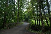 France Savoie Forest Walks