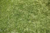 stock photo of substitutes  - Artificial grass  - JPG