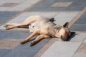 pic of stray dog  - Abandoned homeless stray dog sleeping on the street - JPG