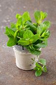 bunch of fresh green fragrant mint on a wooden table