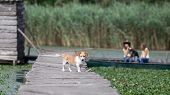 picture of dock  - Dog standing on wooden dock while two girls with another dog sitting in boat in background - JPG