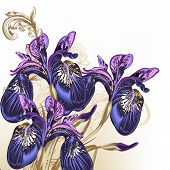 picture of purple iris  - Background with blue and purple irises for design - JPG