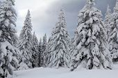 picture of ural mountains  - Snow - JPG