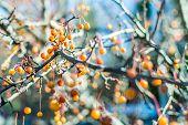Yellow Autumn Berries